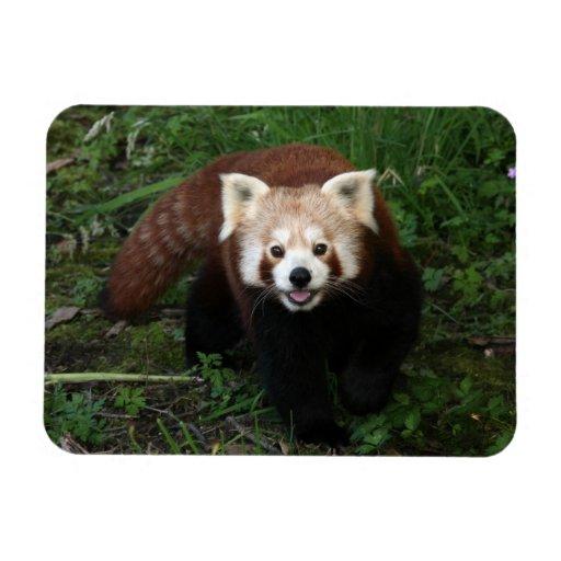 Imán - panda roja