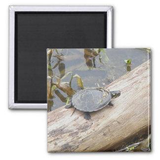 Imán pintado bebé de la tortuga