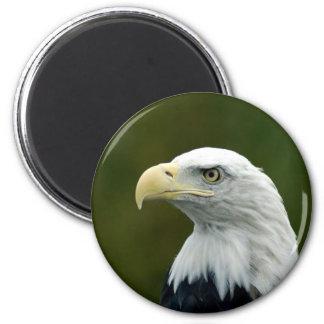 Imán principal calvo de Eagle