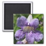 Imán púrpura de la flor