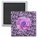 Imán púrpura de los rosas