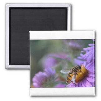 Imán púrpura del cuadrado de la abeja de la pasión