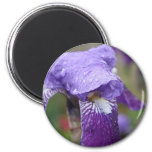 Imán púrpura del iris