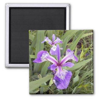 Imán púrpura del iris 2