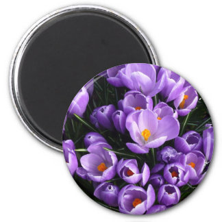 Imán púrpura del refrigerador del azafrán