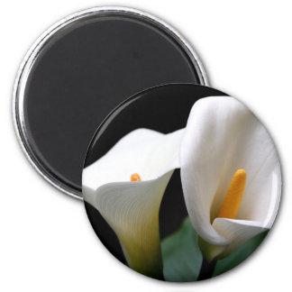 Imán redondo de la flor blanca de la cala