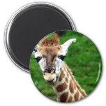 Imán redondo de la foto de la jirafa