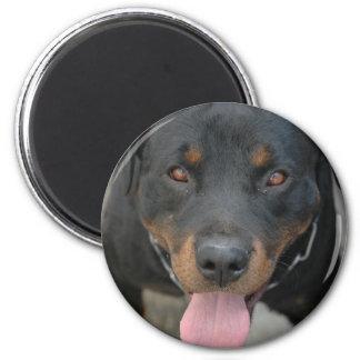 Imán redondo de la imagen de Rottweiler