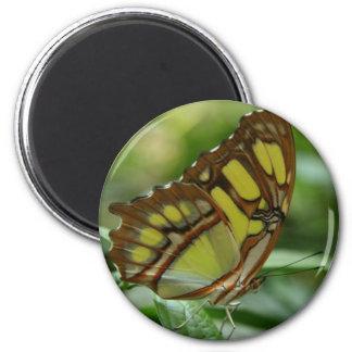 Imán redondo de la mariposa de la malaquita