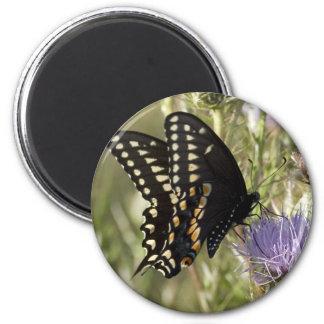 Imán redondo de la mariposa negra de Swallowtail