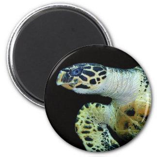 Imán redondo de la tortuga de mar del Leatherback