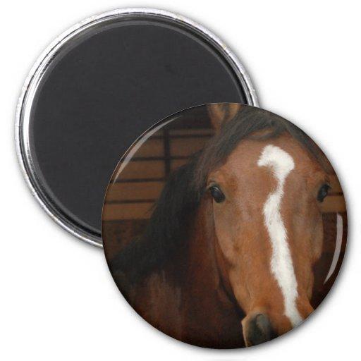 Imán redondo de los caballos árabes