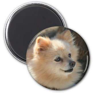 Imán redondo de Pomeranian