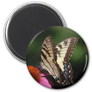 Imán redondo de Swallowtail del tigre occidental