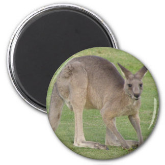 Imán redondo del canguro