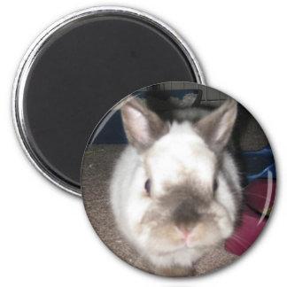 Imán redondo del conejo de conejito