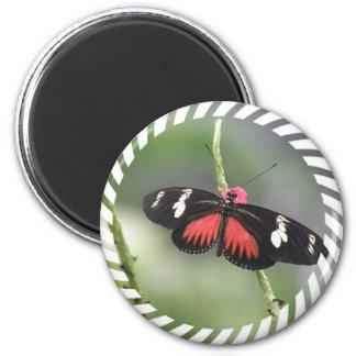 Imán redondo del diseño de la foto de la mariposa