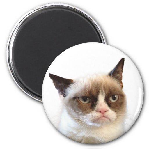 Imán redondo del gato gruñón