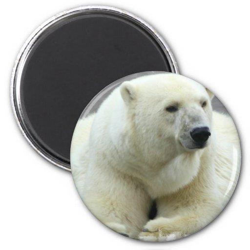 Imán redondo del oso polar