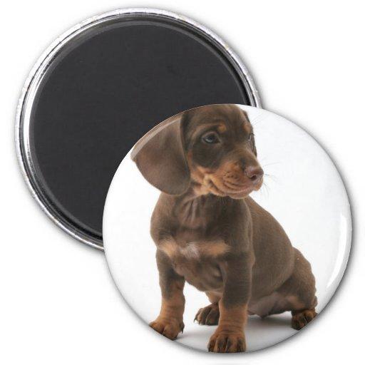 Imán redondo del perrito del Dachshund