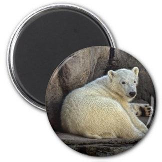 Imán redondo polar de Cub #2 del oso