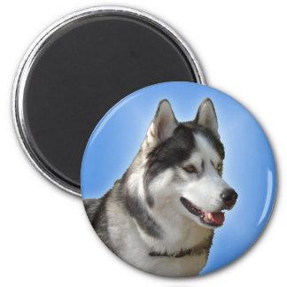 Imán/regalo de Alaska del perro de trineo del imán