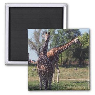 Imán reticulado de las jirafas