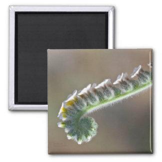 imán rizado verde del tiempo de primavera de la
