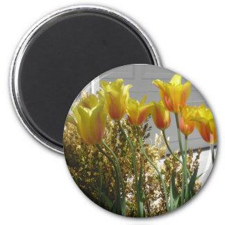 Imán Rojo-Amarillo de los tulipanes