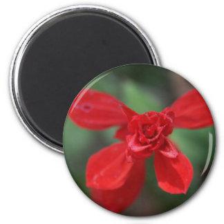 Imán rojo de Salvia