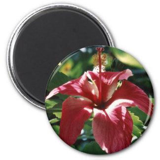 Imán rojo del hibisco