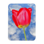 Imán rojo del premio de la flor del tulipán