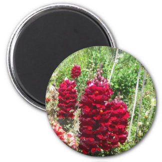Imán rojo del Wildflower