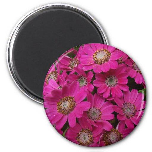 Imán rosado de la flor