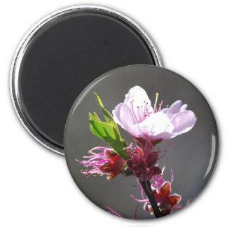Imán rosado de la flor de cerezo