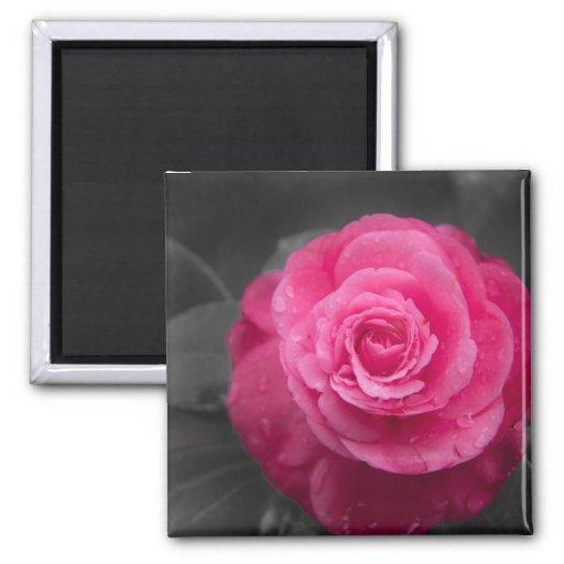 Imán rosado de la flor de la camelia