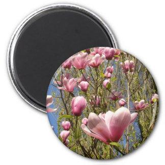 Imán rosado de la magnolia