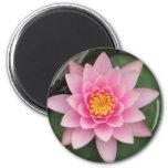 Imán rosado de Lotus