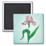 Imán rosado del iris