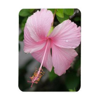 Imán rosado del premio del hibisco