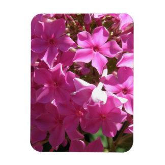 Imán rosado del premio del Phlox