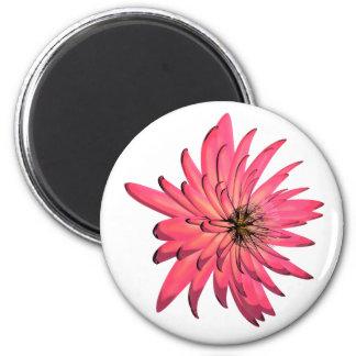 imán rosado oscuro de la flor