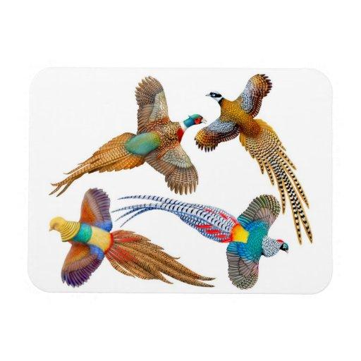 Imán salvaje ornamental del premio de los pájaros