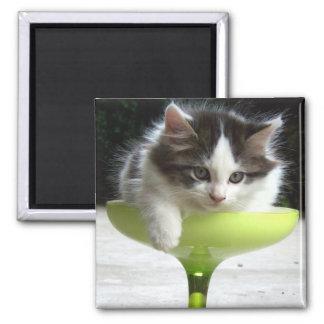 Imán semilleno (del gatito)