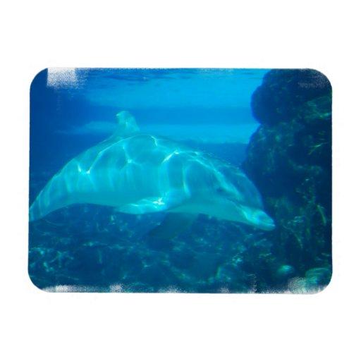 Imán subacuático del premio del delfín