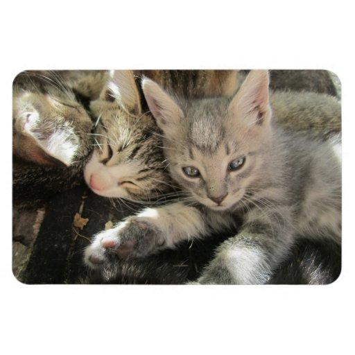 Imán superior de Flexi del gatito de Stardust