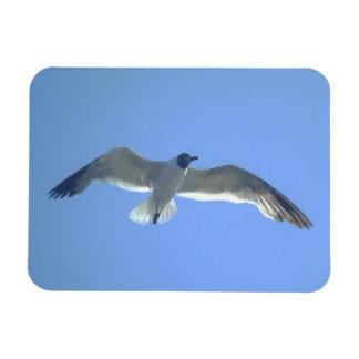 Imán superior de la gaviota en vuelo