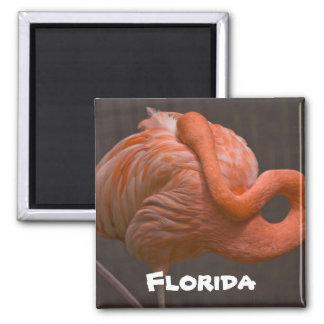 Imán tímido del flamenco de la Florida