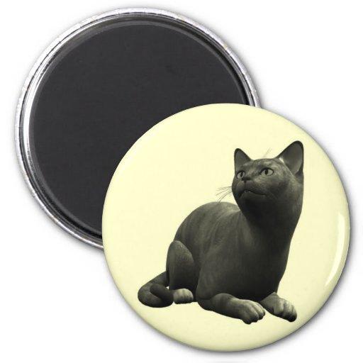 Imán tranquilo del gato negro