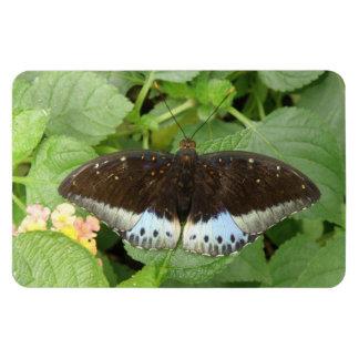 Imán tropical bonito de Flexi de la mariposa